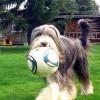 Fussballstar