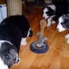 Katzenspielzeug_1