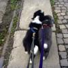 Spaziergang_Gespann