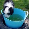 Wasser 2