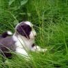 Spass im Gras_2