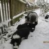 Schnee_5